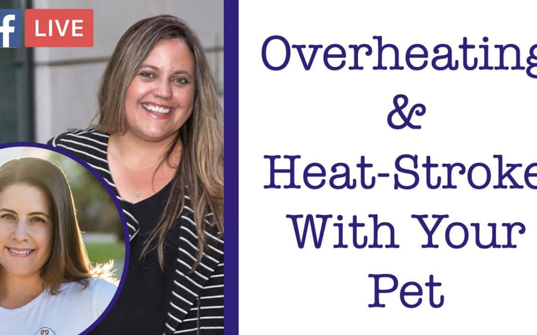 Brachycephalic Dogs and Overheating with Nicole Brown Packin from Miami Pet Concierge